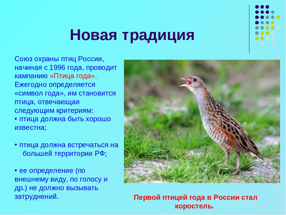 Птица года фото