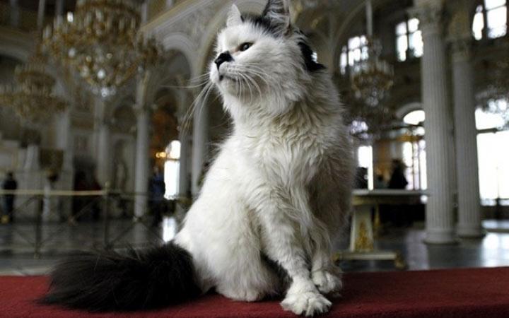 Самый популярный кот Эрмитажа