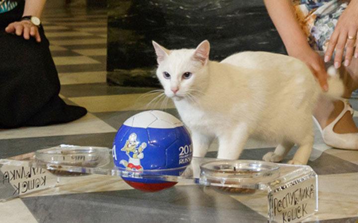 День Эрмитажного кота 2020 - история, традиции, дата проведения