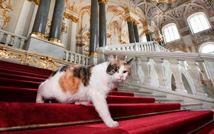 День Эрмитажного кота 2020