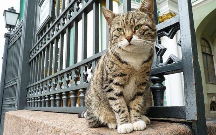 Раздача котов в Эрмитаже в 2020 году