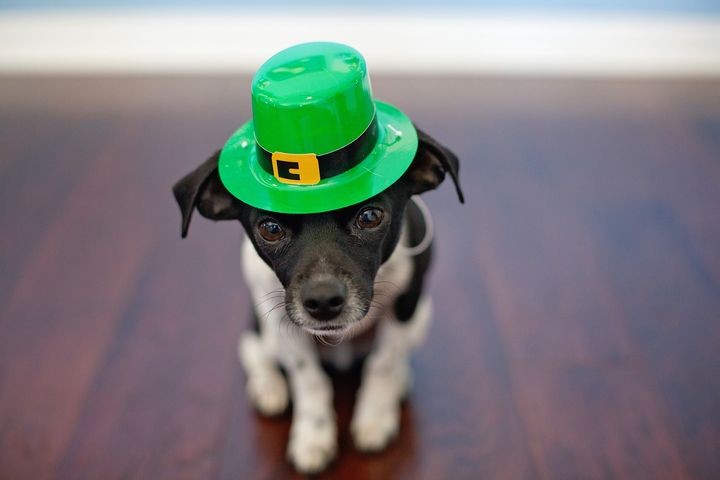 Щенок в зеленой шляпе