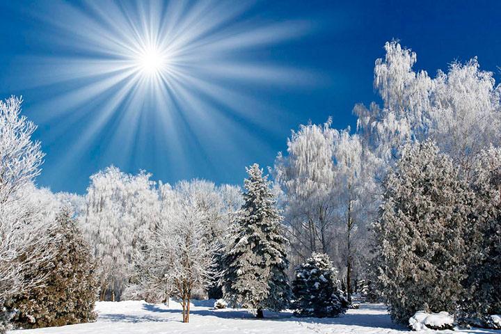 солнце над заснеженными деревьями