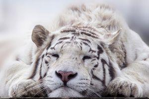Денежный гороскоп для Тигра на 2021 год
