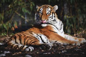 Гороскоп здоровья для Тигров на 2021 год