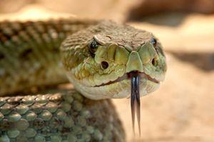 Гороскоп на год для Змеи