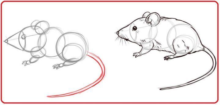 Как нарисовать крысу
