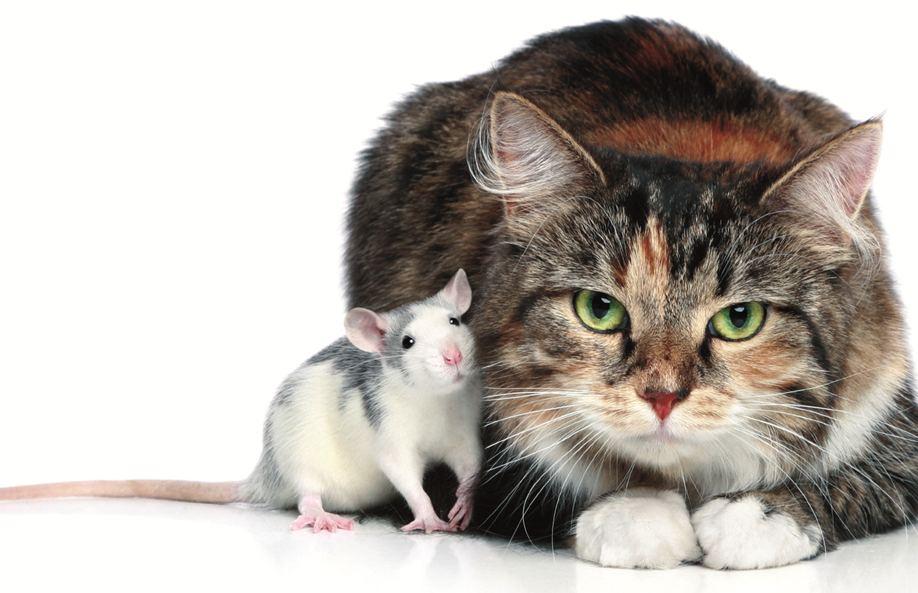 Картинки Крысы — символа 2020 года