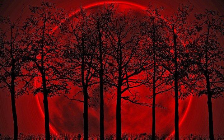 красная луна среди деревьев