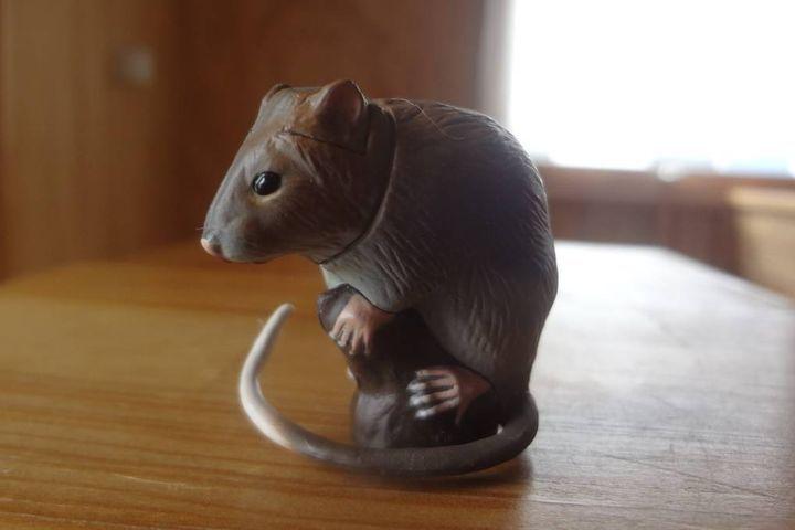Мышь из шоколада