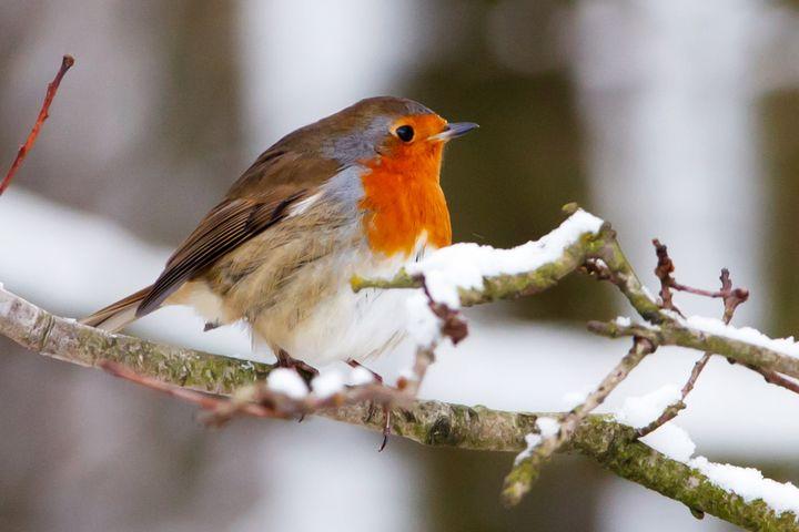 Птица на заснеженной ветке