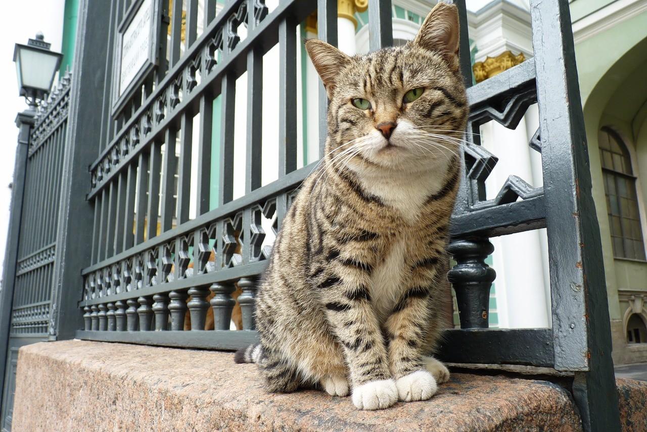День эрмитажного кота в 2019 году фото