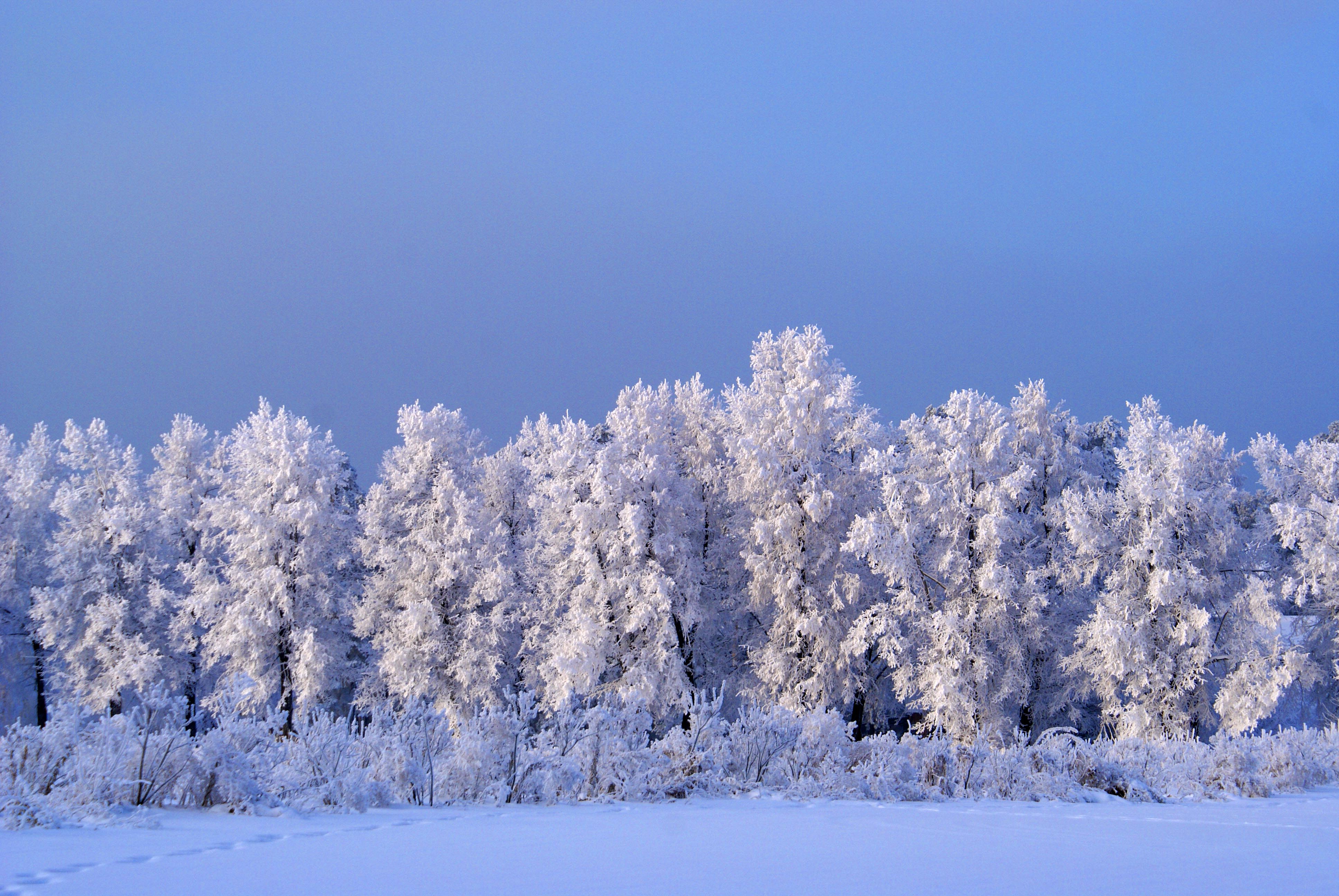 Какая будет зима в Сибири в 2019 году фото